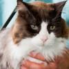kedilerde yaşlılık belirtileri ile ilgili görsel sonucu